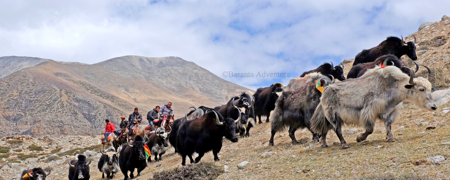 Authentic Tibet Experiences
